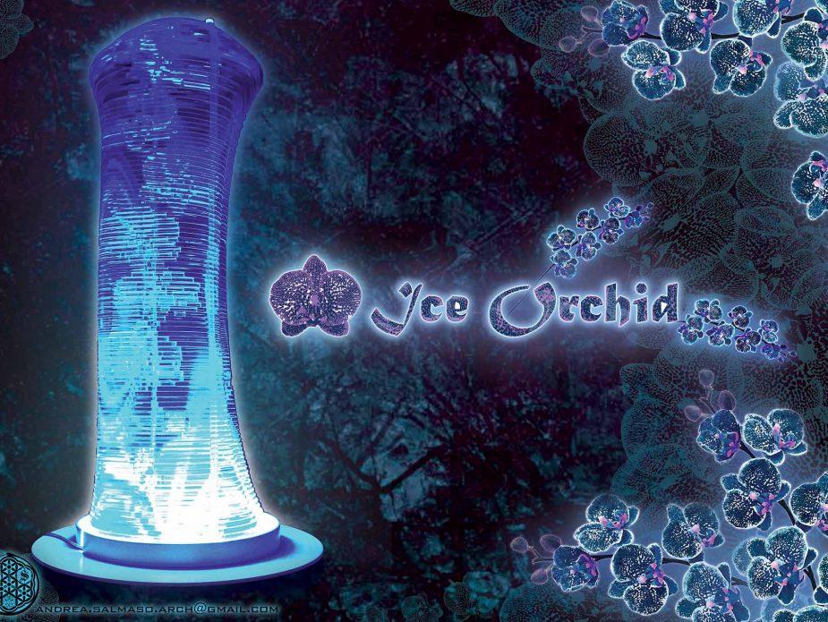 iceorchid_1